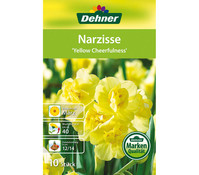Dehner Blumenzwiebel Narzisse 'Yellow Cheerfulness'