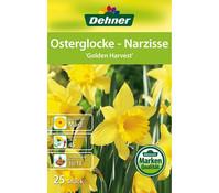 Dehner Blumenzwiebel Osterglocke 'Golden Harvest'