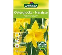 Dehner Blumenzwiebel Osterglocke-Narzissen 'Golden Harvest'