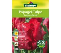 Dehner Blumenzwiebel Papagei-Tulpe 'Bastogne Parrot'