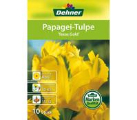 Dehner Blumenzwiebel Papagei-Tulpe 'Texas Gold'