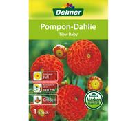 Dehner Blumenzwiebel Pompon-Dahlie 'New Baby'