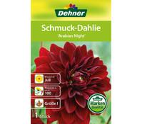 Dehner Blumenzwiebel Schmuck-Dahlie 'Arabian Night'