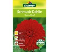 Dehner Blumenzwiebel Schmuck-Dahlie 'Deutschland'