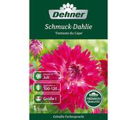 Dehner Blumenzwiebel Schmuck-Dahlie 'Fantaste du Cape'