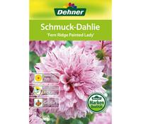 Dehner Blumenzwiebel Schmuck-Dahlie 'Fern Ridge Painted Lady'