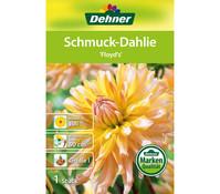 Dehner Blumenzwiebel Schmuck-Dahlie 'Floyd´s'