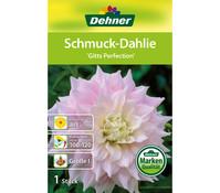 Dehner Blumenzwiebel Schmuck-Dahlie 'Gitts Perfect'