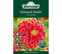 Dehner Blumenzwiebel Schmuck-Dahlie 'Mr. Optimist'