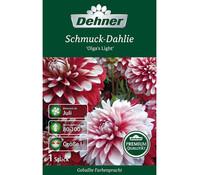 Dehner Blumenzwiebel Schmuck-Dahlie 'Olga`s Light'