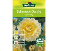 Dehner Blumenzwiebel Schmuck-Dahlie 'Sympathy'
