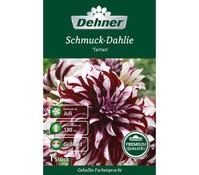 Dehner Blumenzwiebel Schmuck-Dahlie 'Tartan'