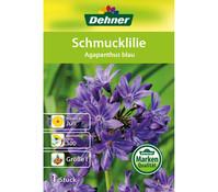 Dehner Blumenzwiebel Schmucklilie 'Agapanthus blau'