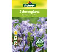 Dehner Blumenzwiebel Schneeglanz 'Chionodoxa Iuciliae'