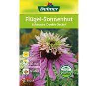 Dehner Blumenzwiebel Sonnenhut 'Echinacea Double Decker'