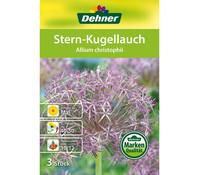 Dehner Blumenzwiebel Stern-Kugellauch 'Allium christophii'