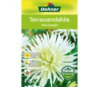 Dehner Blumenzwiebel Terrassendahlie 'Park Delight'