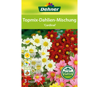 Dehner Blumenzwiebel Topmix Dahlien 'Cardinal'