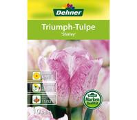 Dehner Blumenzwiebel Triumpf-Tulpe 'Shirley'