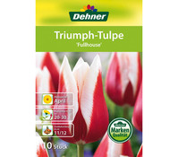 Dehner Blumenzwiebel Triumph-Tulpe 'Fullhouse'