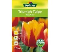 Dehner Blumenzwiebel Triumph-Tulpe 'Kees Nelis'