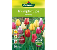 Dehner Blumenzwiebel Triumph-Tulpe 'Mischung'