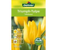 Dehner Blumenzwiebel Triumph-Tulpe 'Yokohama'