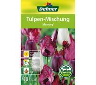 Dehner Blumenzwiebel Tulpen-Mischung 'Memory'