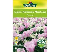 Dehner Blumenzwiebel Tulpen-Narzissen-Mischung 'Fantasy'