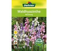 Dehner Blumenzwiebel Waldhyazinthe 'Mischung'