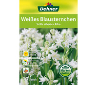 Dehner Blumenzwiebel Weißes Blausternchen 'Scilla siberica Alba'