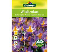 Dehner Blumenzwiebel Wildkrokus 'Botanischer Krokus Sublimis Tricolor'