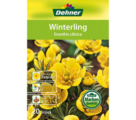 Dehner Blumenzwiebel Winterling 'Eranthis cilicia'