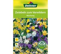 Dehner Blumenzwiebel Zwiebeln zum Verwildern 'Mischung'
