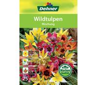 Dehner Blumenzwiebeln Wildtulpen 'Mischung'
