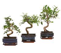 Dehner Bonsai, in Keramik, Sortenmix