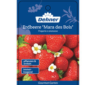 Dehner Gourmet Garten Erdbeere 'Mara des bois'