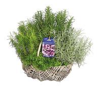 Dehner Gourmet Garten Kräuterkorb mediterran, 30 cm