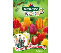 Dehner Kids Blumenzwiebeln Tulpenmischung