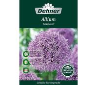 Dehner Premium Blumenzwiebel Allium 'Gladiator'