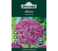 Dehner Premium Blumenzwiebel Allium 'Globemaster'
