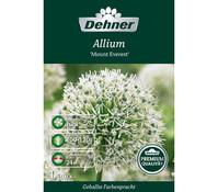 Dehner Premium Blumenzwiebel Allium 'Mount Everest'