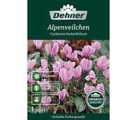 Dehner Premium Blumenzwiebel Alpenveilchen 'Cyclamen hederifolium'
