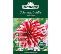 Dehner Premium Blumenzwiebel Dahlie 'Santa Claus'