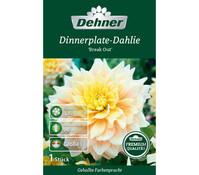 Dehner Premium Blumenzwiebel Dinnerplate-Dahlie 'Break Out'
