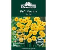 Dehner Premium Blumenzwiebel Duft-Narzisse 'Sun Disc'