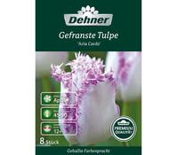Dehner Premium Blumenzwiebel Gefranste Tulpe 'Aria Cards'