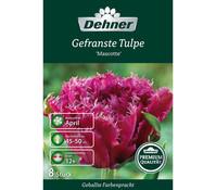 Dehner Premium Blumenzwiebel Gefranste Tulpe 'Mascotte'