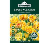 Dehner Premium Blumenzwiebel Gefüllte frühe Tulpe 'Double Early Aquilla'