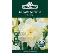 Dehner Premium Blumenzwiebel Gefüllte Narzisse 'Ice King'